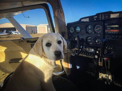 This dog's about to fly high.