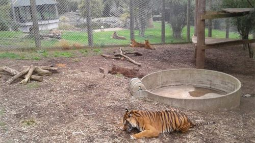 Female keeper killed by tiger in NZ zoo