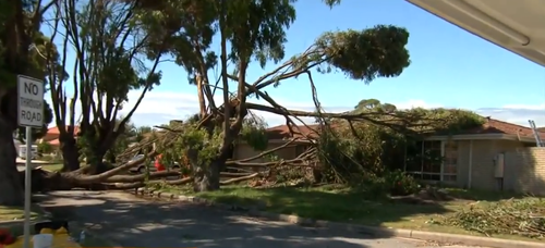 Ferocious winds brought down trees and ripped off roofs. (9NEWS)