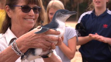Injured penguins released back into the wild after zoo recovery