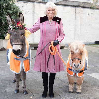 <p>The Duchess of Cornwall supports pet love, December 2018</p>