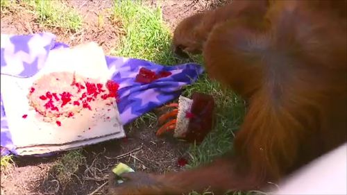 Both animals got specially made cakes filled with their favourite foods. (9NEWS)