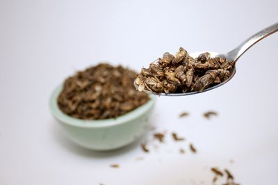 <strong>Crickets</strong>