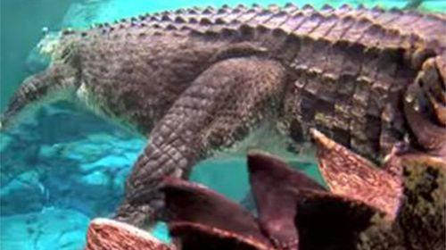 Drunk teens break into croc park, taunt famous resident