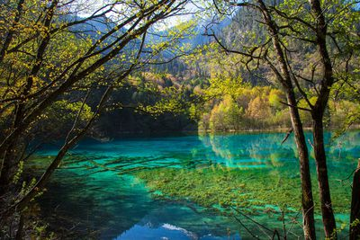 Five Flower Lake, North of Sichuan, China