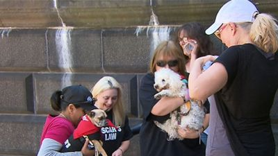 Victoria outlaws 'unnecessary, cruel' puppy farms