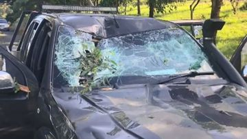 Adelaide family terrified by 10 metre long tree branch smashing into car.