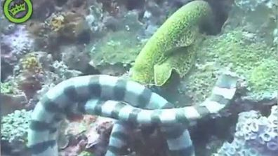 """<p _tmplitem=""""1"""">The sea is full of danger. </p> <p _tmplitem=""""1""""> A diver recently witnessed a vicious battle between a sea snake and a moray eel that shows the awesome and deadly nature of life in the deep blue. </p> <p>Take a look through for other incredible and deadly sea creature challenges.  </p> <p _tmplitem=""""1""""> </p>"""