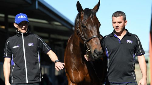 Winx is now six years old, and has won $15 million in prize money. (AAP)
