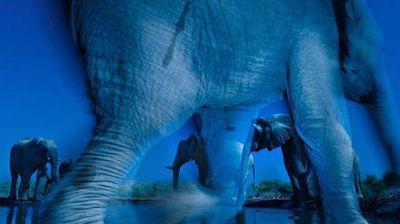 Essence of elephants. Photo: Greg Du Toit, South Africa.
