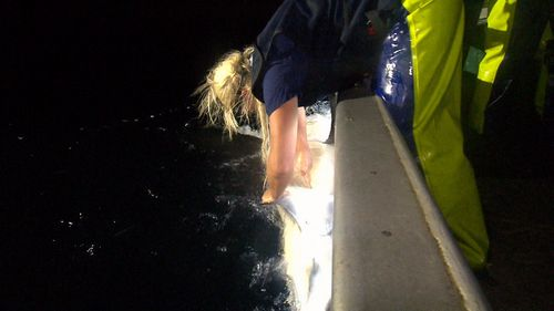 About 60 bull sharks have been caught in the Harbour since 2009. (9NEWS)