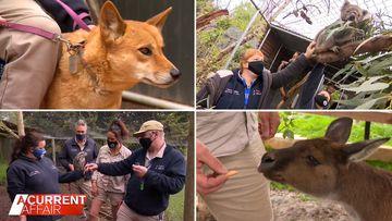 Volunteers on NDIS help make zoo a success story
