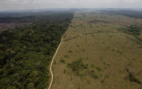 Bundchen claimed there has been a 13 percent increase in Amazon deforestation.