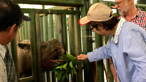 The Sumatran rhinoceros has become extinct in Malaysia, after the last of the species in the country succumbed to cancer.