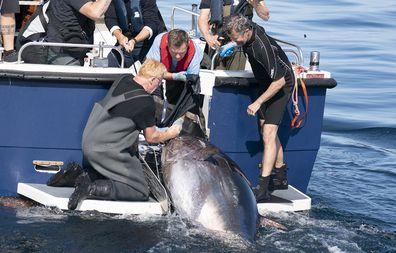 Crown Prince Frederik tuna conservation in Denmark