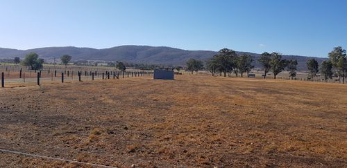 Parched paddocks are a common sight outside Scone, NSW