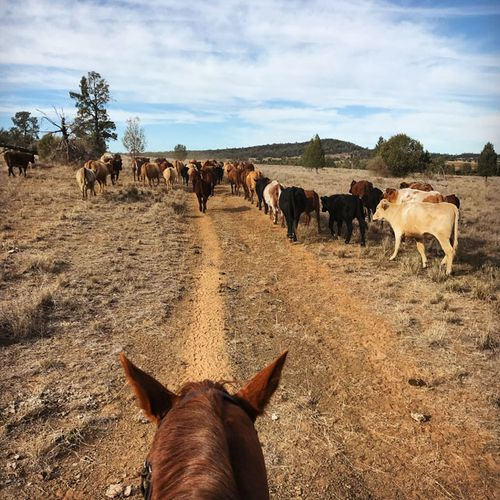 The Warialda region has been officially placed on drought watch. (Photo: Elizabeth Hollow)
