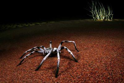 Night stalker by Javier Aznar Gonzalez