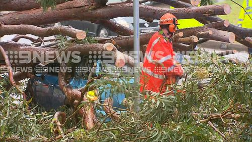 SES services clear the wreckage of the tree which injured two officers.