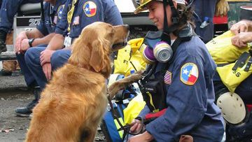 The last surviving 9/11 dog is honoured
