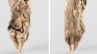 DNA analysis of a 1,600-year-old mummified sheep leg found in Iran has uncovered clues as to how the ancient people of the Middle East lived.