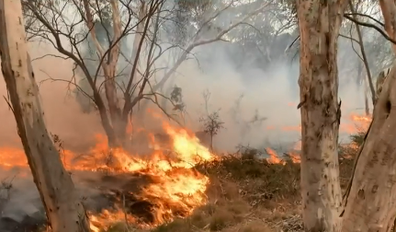 Bushfires in southern tablelands.