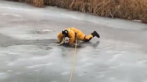 Quick action by a fire crew saved the dog's life.