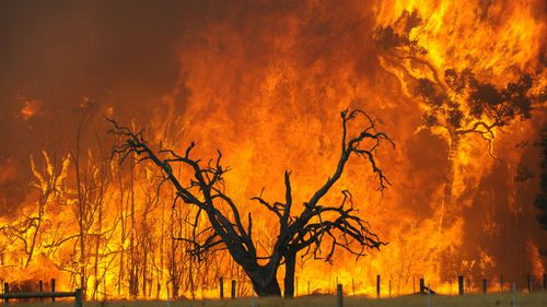 Record $500m payout approved for Black Saturday bushfire survivors
