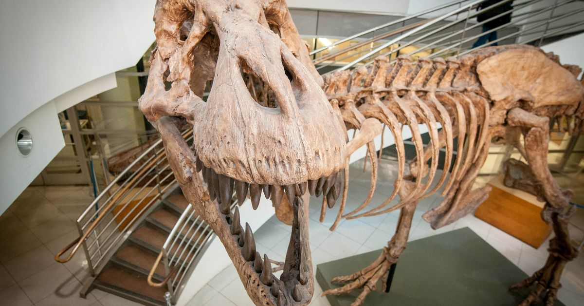 Researchers say they know how many T-rex roamed the planet – 9News