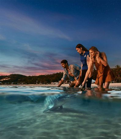 Tangalooma dolphin feeding