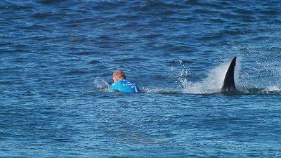 The shark puncher - A decade of sport