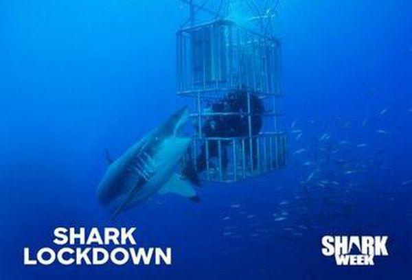 Shark Lockdown