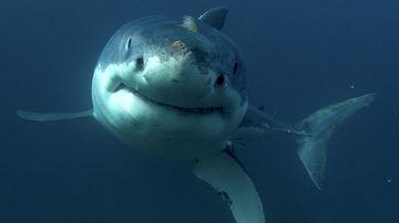 How Australia became so afraid of sharks