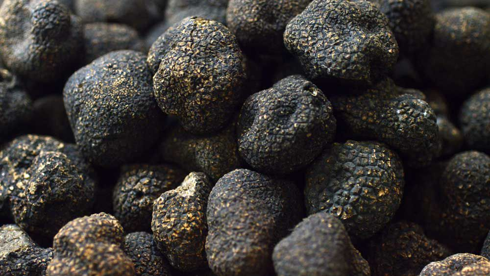Truffles are black gold