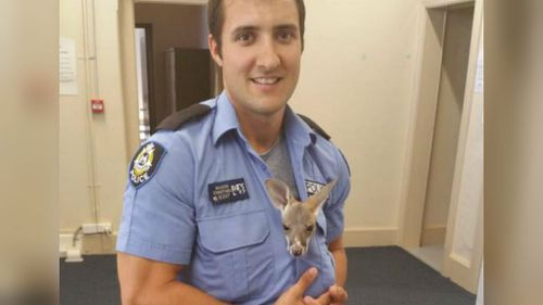 West Australian cop adopts baby roo after mother hit by car