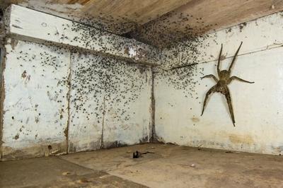 'The spider room'. Winner - Urban wildlife.