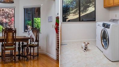 hilarious home listing features dog