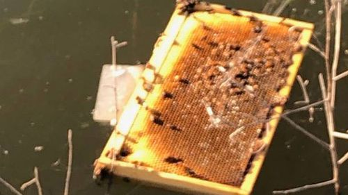 Arsonists burn more than half a million bees in shocking attack