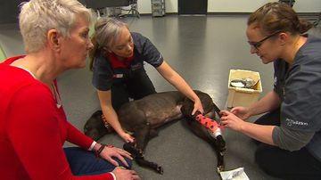 How spending $89 now could help save your pet's life later