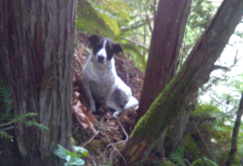 Searchers in Washington have praised a loyal dog that stayed by it's owner's side and barked until help arrived.