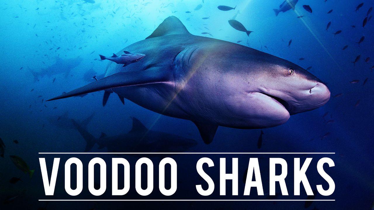 The Voodoo Shark
