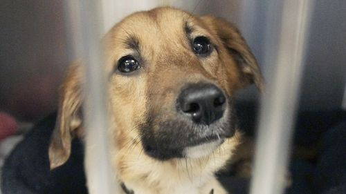 Animal lovers rejoice: US court upholds law forcing Phoenix pet stores to sell rescue cats and dogs