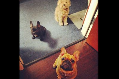 Whatever older pups Fozzi and Stella, we know who the real star is around here.