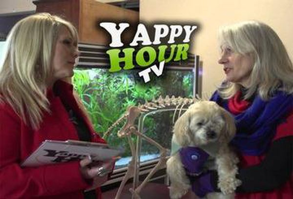 Yappy Hour TV