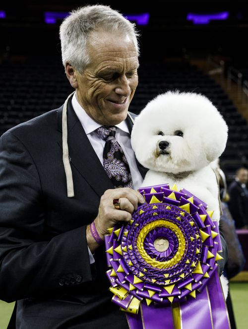 The bichon frise with his prize. (AP)