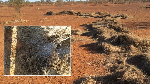 A close up of the alleged mould in the donated bale delivered to the Truss property in Queensland.