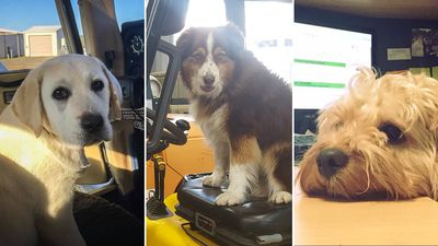 Pooches put their paws to work across the country