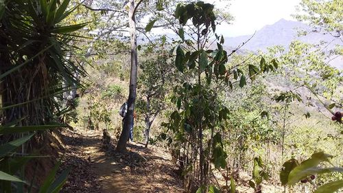 Ms Shaw went missing on a walking trail in thick bushland.