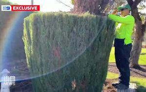 Man blows up at council workers mowing down 99-year-old war memorial hedge