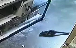 Cairns bottle shop bandit turns out to be endangered northern quoll